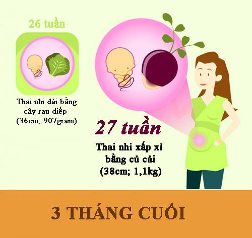 Cân nặng, chiều dài chuẩn của thai nhi theo từng tuần thai - 6