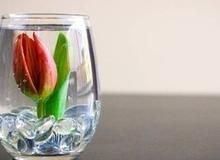 Cắm hoa trong nước đơn giản đẹp tinh tế
