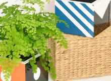 Tự chế chậu trồng cây trang trí nhà thêm bắt mắt