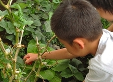 Chùm ảnh cận cảnh một giờ học về thiên nhiên của trẻ mẫu giáo Nhật