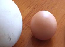 Trứng ngỗng không phải là 'thần dược' giúp bà bầu đẻ con thông minh