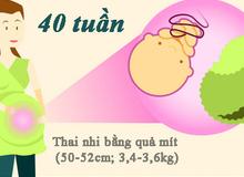 Cân nặng, chiều dài chuẩn của thai nhi theo từng tuần thai