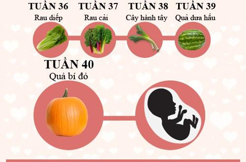Mô tả thú vị về kích thước thai nhi trong bụng mẹ - 5