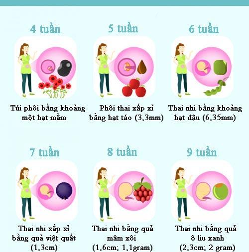 Cân nặng, chiều dài chuẩn của thai nhi theo từng tuần thai - 2