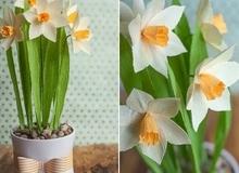 Làm hoa thủy tiên giấy đẹp rực rỡ sinh động