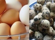 Cho con ăn trứng gì bổ nhất?