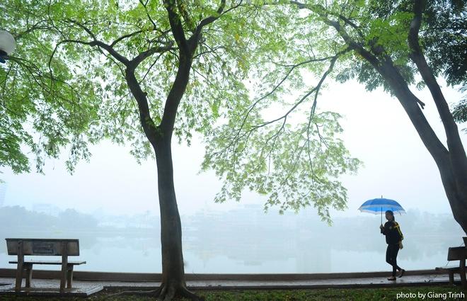 Màu xanh non của cây sưa mang đến không khí rất xuân cho khu vực hồ Giảng Võ.