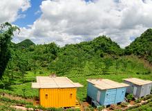 Du lịch Mộc Châu ngủ bungalow container ngắm những đồi chè xanh mát