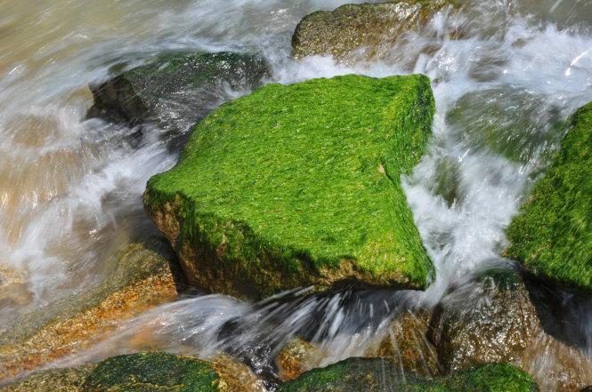 Rêu xanh bám chắc vào các tảng bêtông - Ảnh: Dương Thanh Xuân
