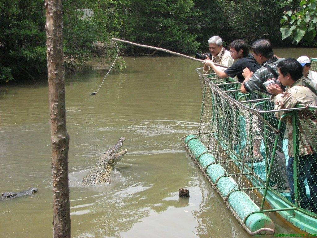 Câu cá sấu. Ảnh: vinaexplorer