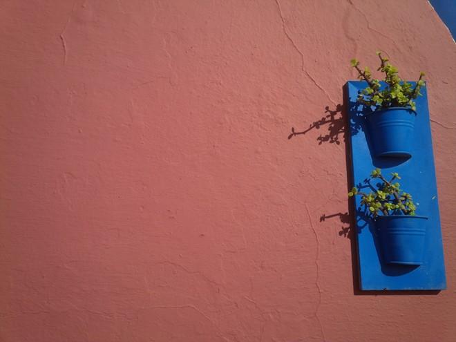 Những chậu hoa nhỏ trên tường.