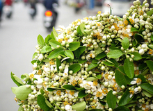 'Đặc sản' tháng 3 gây thương nhớ khi du lịch Hà Nội
