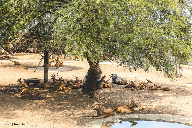 Nhìn ảnh này khiến ta liên tưởng đang ở một công viên hoang dã nào đó bên tận châu Phi.