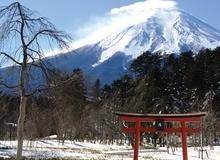 Du Xuân dưới 'nóc nhà' Nhật Bản