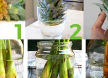 6 mẹo hay giúp bạn không bao giờ phải đi mua rau củ