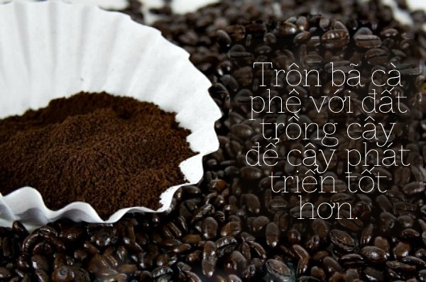 Những mẹo tái sử dụng bã cà phê hữu ích trong gia đình 3