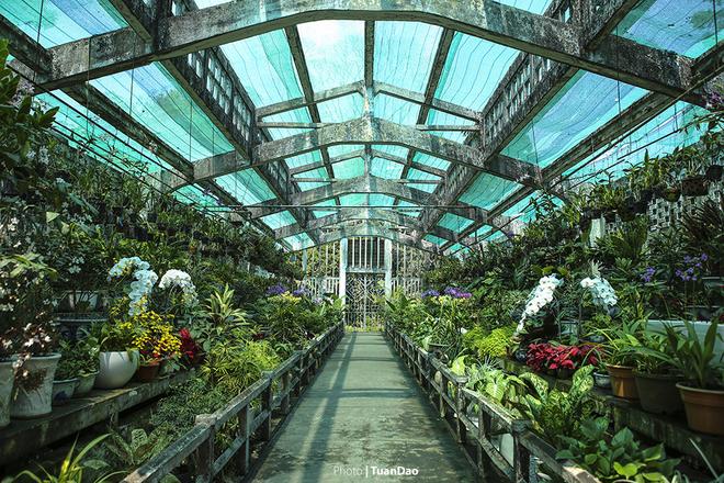 Một khu nhà kính để trồng các loại hoa lan.