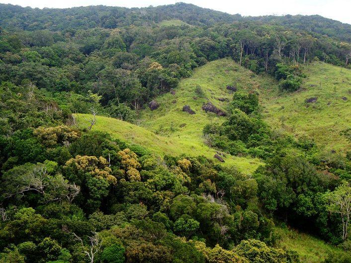 Khung cảnh xanh tươi của Vườn quốc gia Núi Chúa. Ảnh: ST