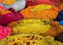 Khám phá cuộc sống đầy sắc màu của Ấn Độ qua những bức ảnh ấn tượng