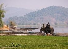 4 ngày du ngoạn Đắk Lắk dịp hội đua voi