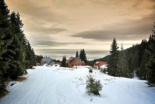 Trượt tuyết ở Krkonoše: Tháng mười một đến tháng hai là mùa trượt tuyết ở Czech. Sau khoảng một giờ đi xe buýt từ trung tâm Prague, bạn sẽ bắt gặp một bức màn phủ đầy tuyết tuyệt đẹp. Buổi tối khi đã trượt tuyết xong, không còn gì tuyệt hơn là một tô súp nóng tại ngôi nhà gỗ ấm cúng phía sau rặng núi.