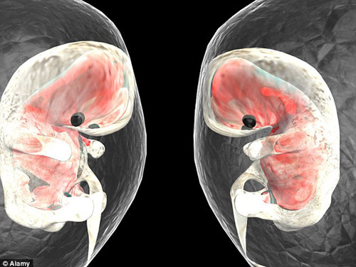 kham pha bat ngo ve nhip dap dau tien khi thai nhi hinh thanh - 2
