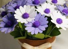 Xinh yêu chậu hoa cúc không bao giờ tàn