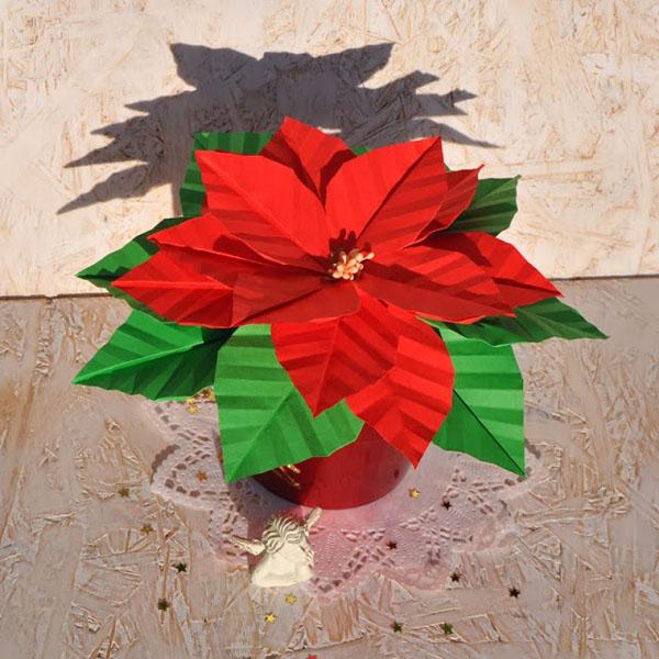 Trang trí nhà chuẩn bị đón năm mới với chậu hoa trạng nguyên đẹp rực rỡ  - Ảnh 8.
